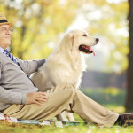 Health Advantages of Getting Pets 2015
