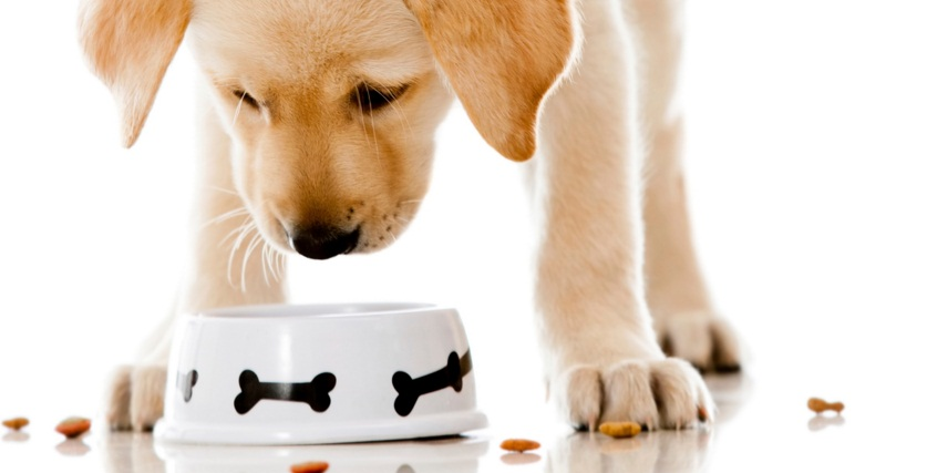 Advantages Of Healthy Food for Pets 2015