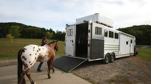 Make Sure Your Horse Trailer Is Insured When You Visit The Vet