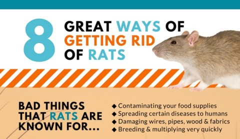Sensible Ideas‬ For Strategies To Preempt Or Get Rid Of A Rodent Infestation