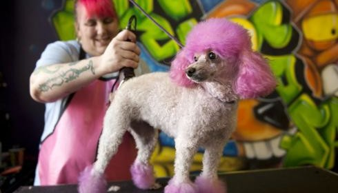 Dog Grooming Salon – Some Imperative Aspects You Must Consider