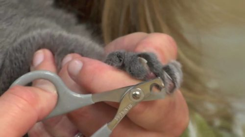 How To Trim Your Cats Nails