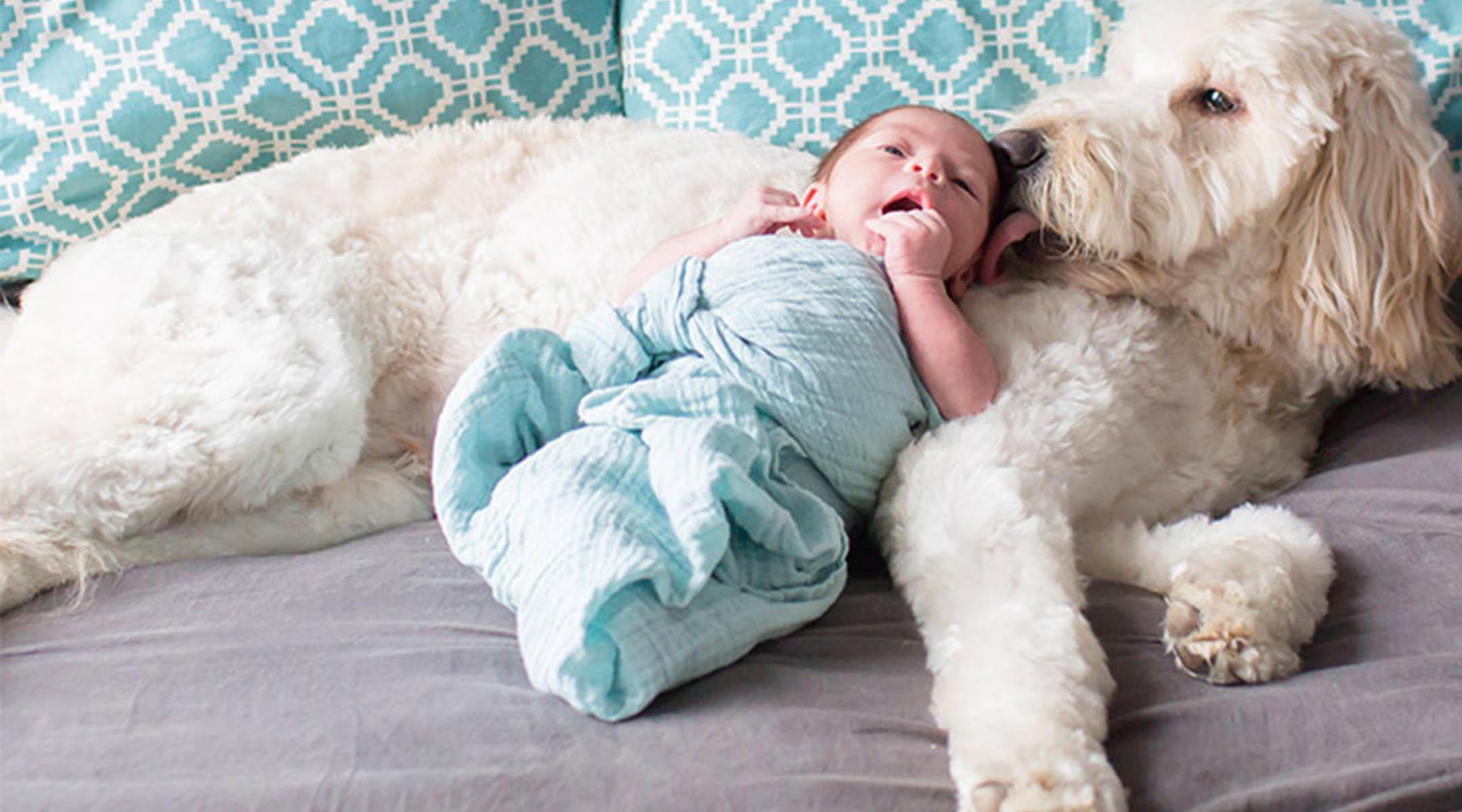 Dog To Your Newborn