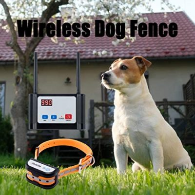 Can A Wireless Dog Fence Be An Alternative Of A Physical Fence?