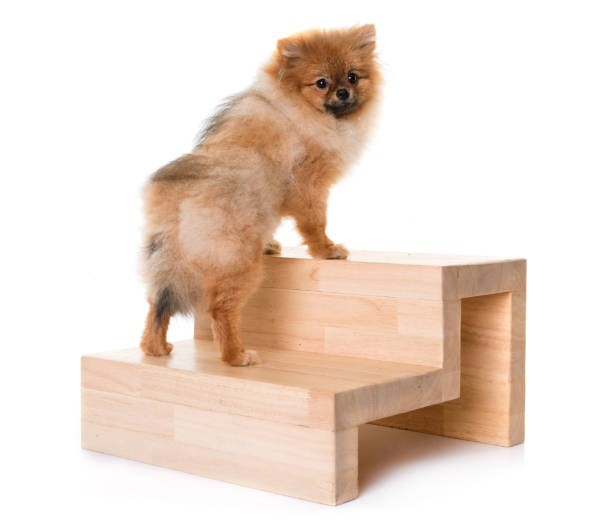 Stairs for Dogs